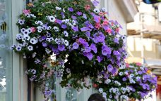 Would you like a hanging basket?